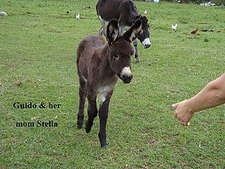 Guido & stella