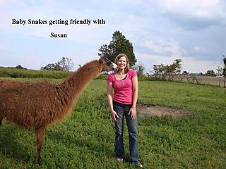 Susanbabys