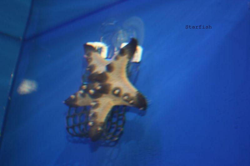 Septstarfish